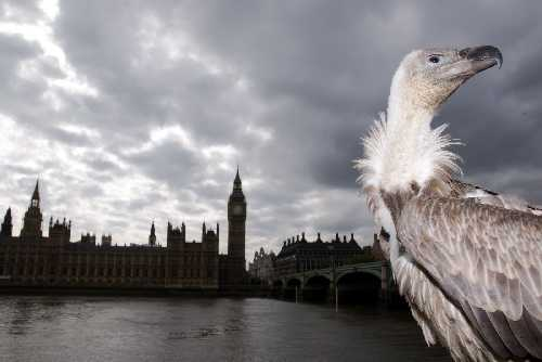 A vulture outside the UK house of Parliament, ahead of a law being passed in 2010 to limit vulture funds ability to sue the most impoverished countries in UK courts.