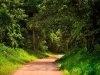 Uganda road_Small